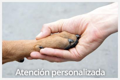 atención personalizada veterinario valencia