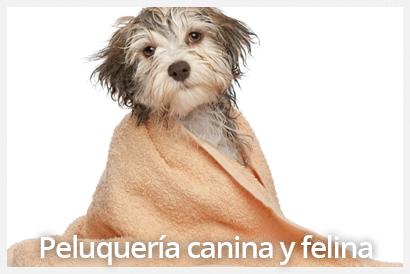 peluqueria canina y felina veterinario valencia