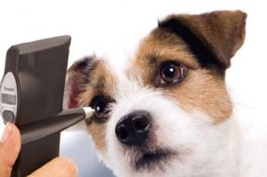 clinica-veterinaria-valencia2