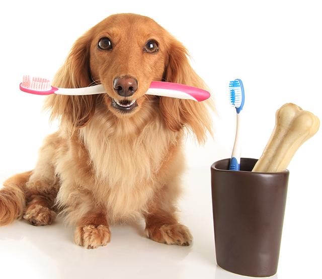 odontología perros gatos veterinario Valencia