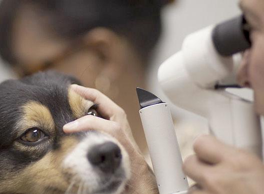 oftamologia veterinario Valencia
