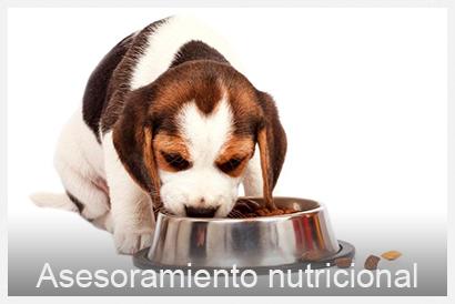 asesoramiento nutricional veterinario Valencia