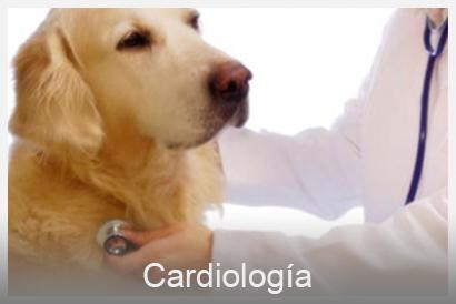 cardiología veterinario Valencia