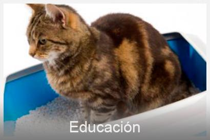 educación y comportamiento perros gatos