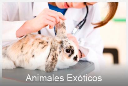 animales exóticos veterinario Valencia