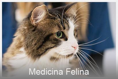 medicina felina veterinario Valencia